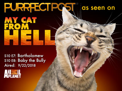 Look for the Purrfect Post on My Cat From Hell on Animal Planet 9/22/2018