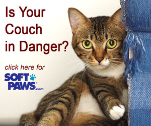 SoftPaws Is Your Couch In Danger