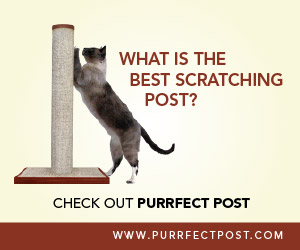 The Best Scratching Post Purrfect Post