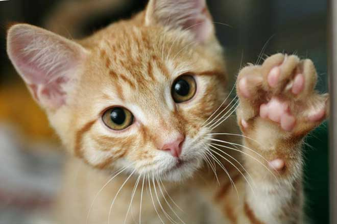 Please do not declaw... please