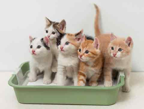 There are tips and tricks for cleaning the litter box.
