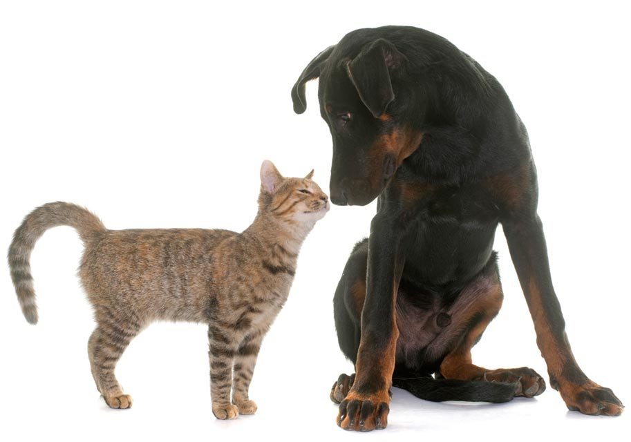 Cats and dogs need help to meet and do well together.