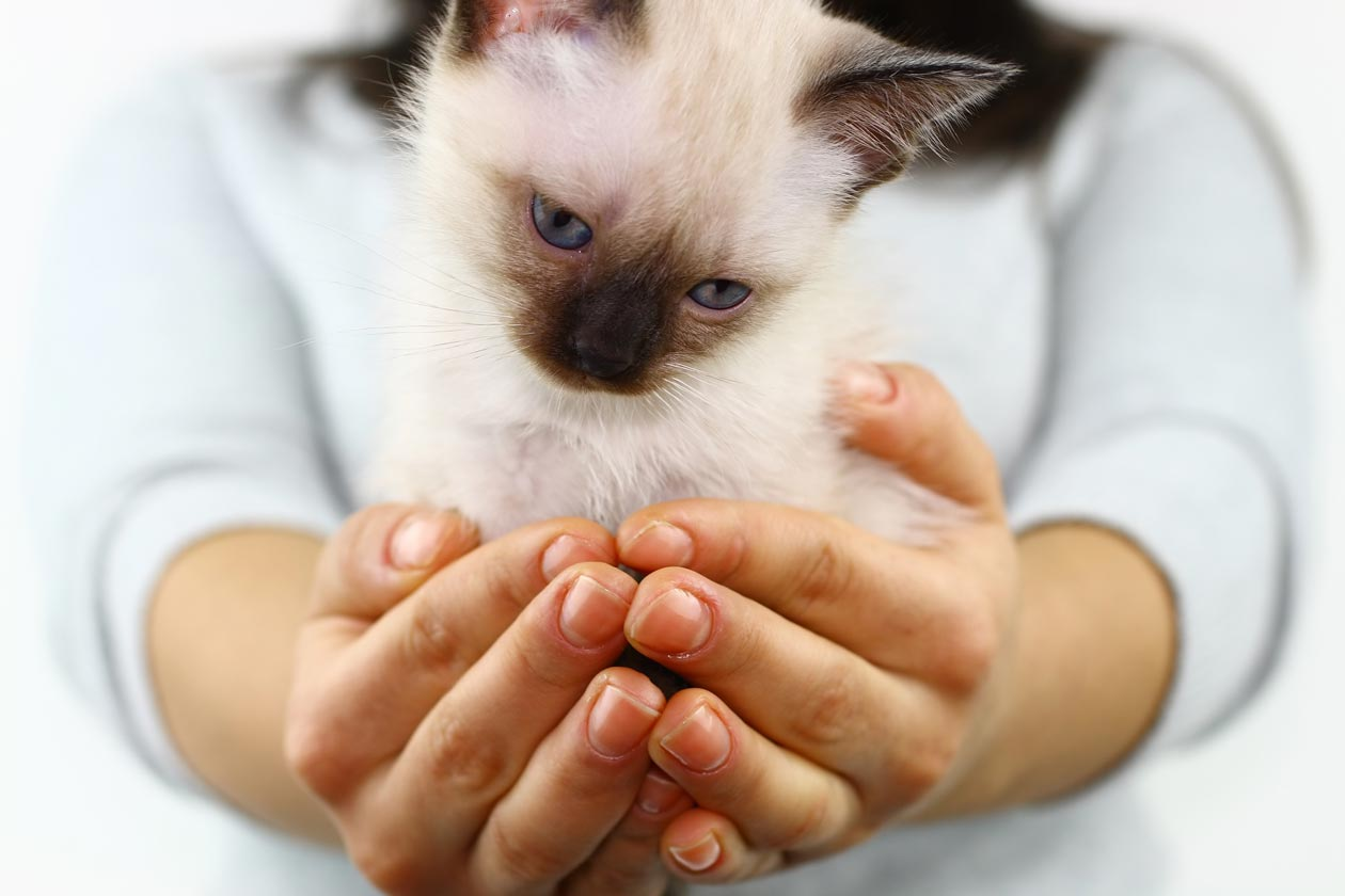 Learn five ways to bond with a new cat.