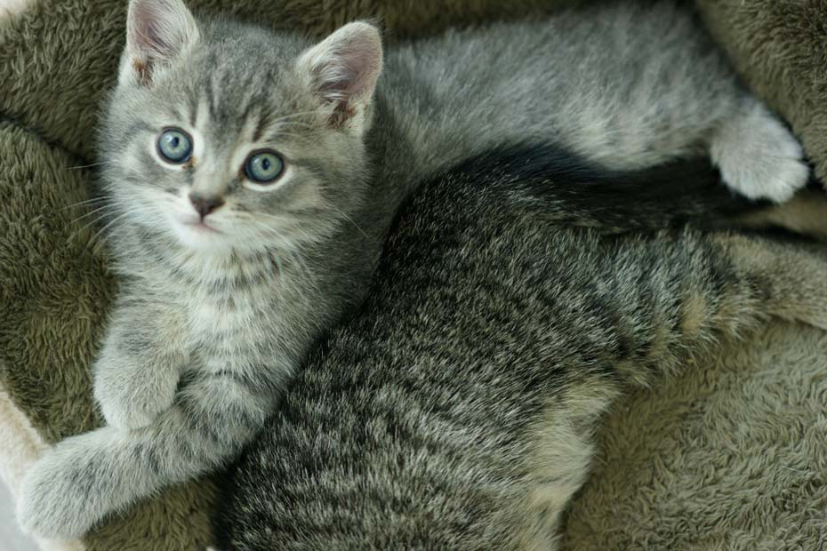 Learn how to choose the right kitten for your family.