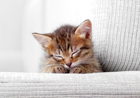 Learn how to keep your cat from scratching at your sofa.