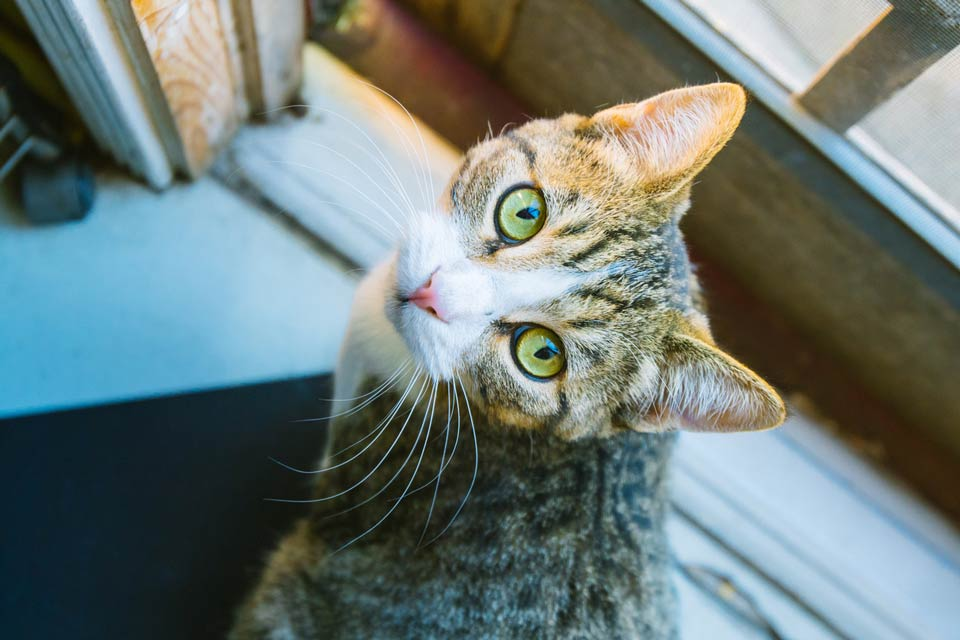 Learn about catios and keeping outdoor cats inside.