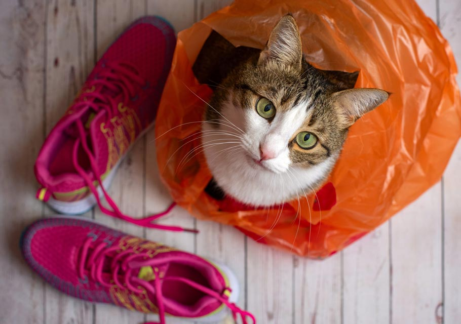 Learn about why some cats chew on and eat plastic.